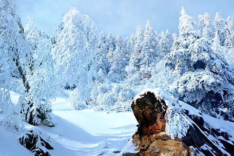 【冬游:神农架】湖北神农架自然保护区双飞4天深度游
